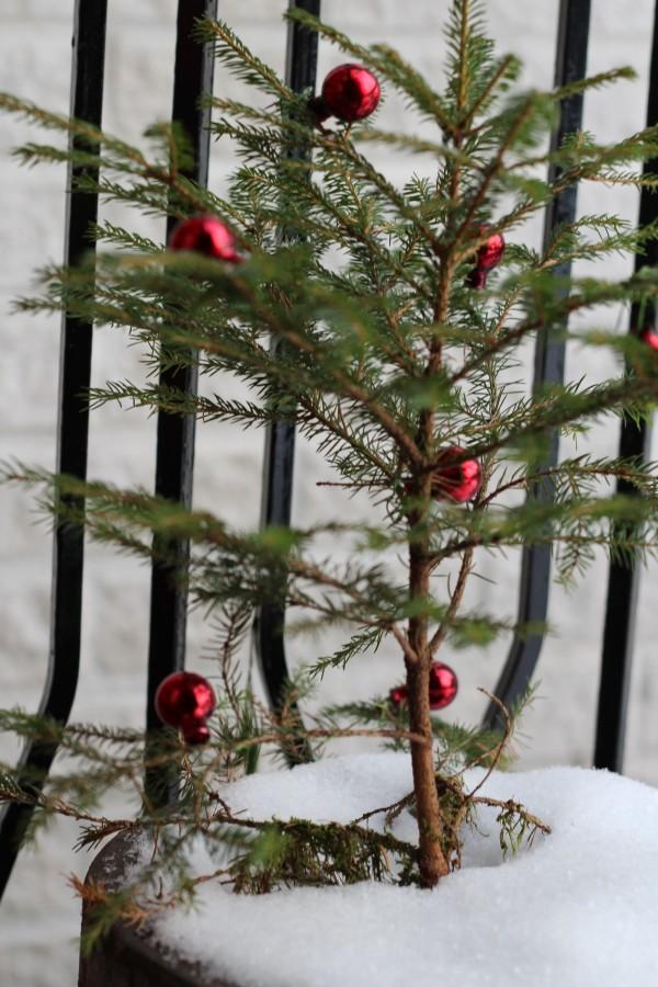 11 december – Gröt & granpynt